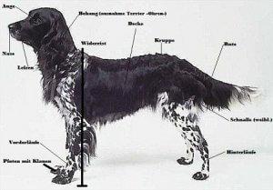 hund1